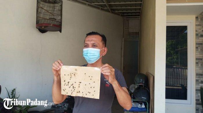 Curhat Warga Padang 4 Tahun Hidup di 'Kerajaan Lalat', Kandang Ayam Disebut jadi Biang Keroknya