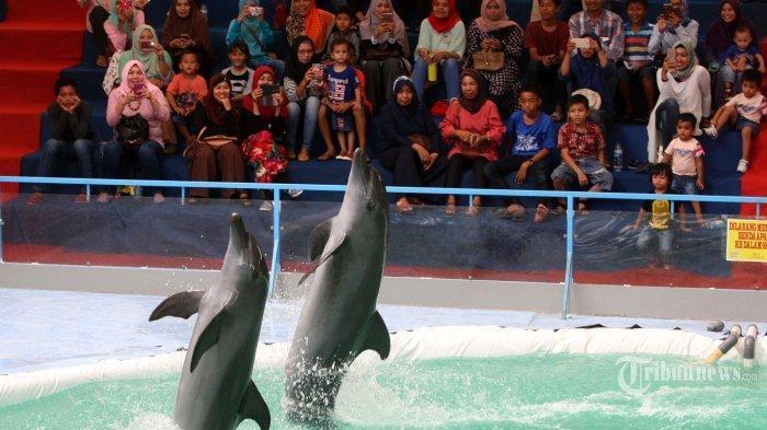 Walhi Sumatera Barat Minta Wali Kota Padang Batalkan Izin Sirkus Lumba-lumba