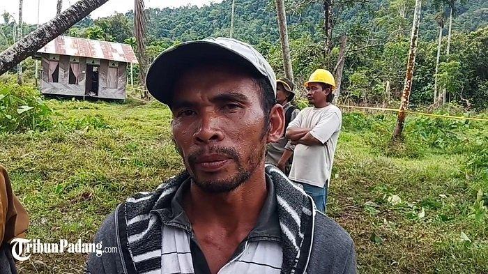 Harimau Sumatera Ngamuk setelah Masuk Perangkap, Telah Memangsa Kambing Milik Warga
