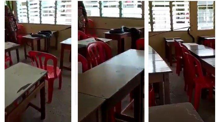 Viral Video Ular Cobra Dalam Meja Disebut di SD 14 Padang, Penjaga Sekolah Ungkap Fakta Sebenarnya