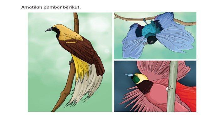 Jawaban Tema 3 Kelas 4 Halaman 49: Apa Saranmu agar Kelestarian Burung Cenderawasih Tetap Terjaga?