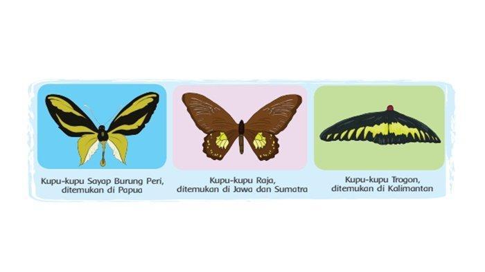 Apa yang Bisa Kamu Lakukan untuk Melindungi Kupu-kupu? Kunci Jawaban Tema 3 Kelas 4 Halaman 52