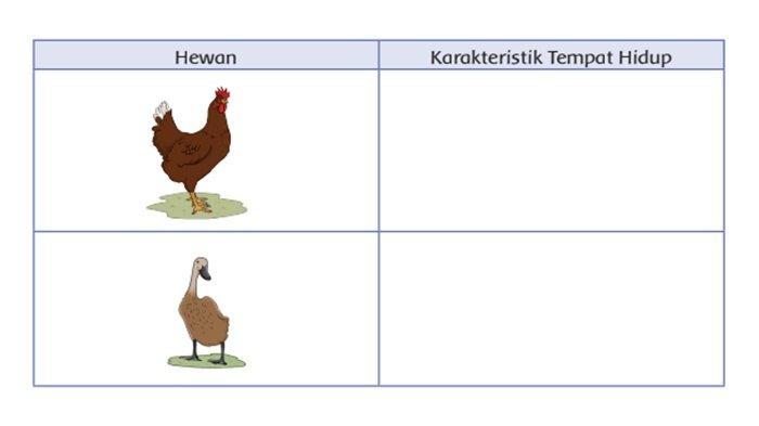 Kunci Jawaban Buku Tema 3 Kelas 4 SD
