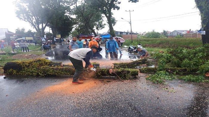 Hujan Badai Angin Kencang Landa Kota Padang, Mobil dan Rumah Warga Ditimpa Pohon Tumbang