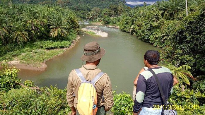 HEBOH! Buaya Muara Muncul di Sekitar Bendungan Irigasi Batang Tongar, Pasaman Barat
