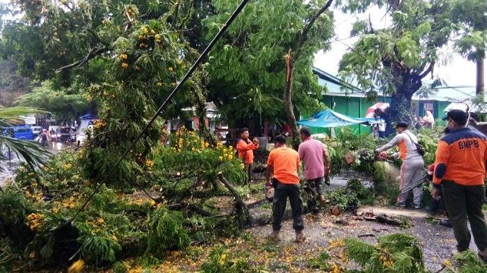 Pohon Patai-patai di Kota Padang Tumbang Lalu Timpa Kabel Listrik, Akses Jalan Terganggu