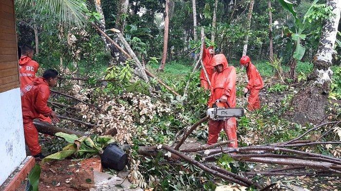 Rumah Petani di Padang Pariaman Ditimpa Pohon, Akibat Diterjang Angin Kencang