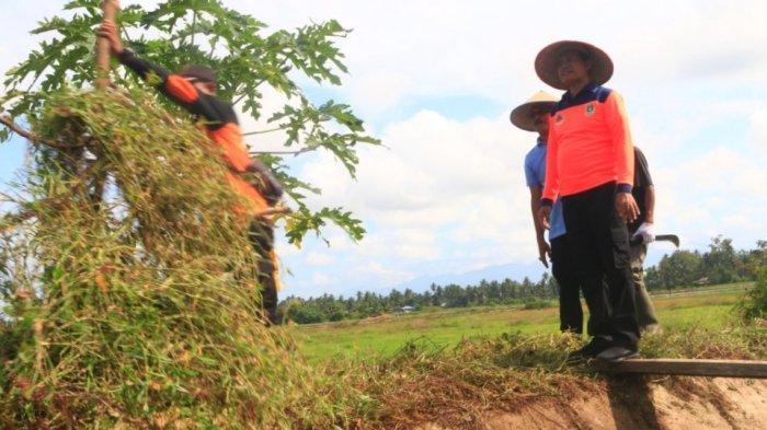 Bantu Petani di Desa Marabau, Wali Kota Pariaman Genius Umar Ajak ASN Bersihkan Area Persawahan