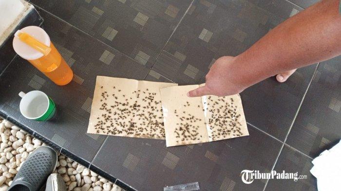 Warga di Rt 03/Rw 01, Kelurahan Pisang, Kecamatan Pauh, Kota Padang, Sumatera Barat, terpaksa memasang perangkap untuk menangkap lalat Sabtu (22/5/2021). Warga mengeluhkan serangan lalat yang hampir mereka rasakan sepekan setiap bulannya.