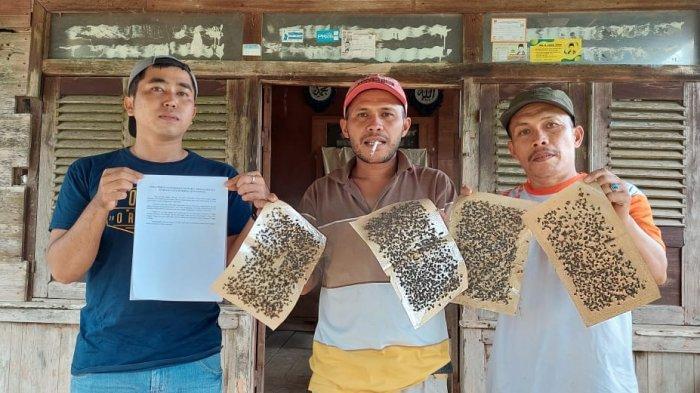 Warga menunjukkan ribuan lalat yang dijebak menggunakan kertas lem, Ribuan ini menyerbu rumah warga Jorong Koto Tingga Nagari Sirukam Kecamatan Payung Sekaki Kabupaten Solok, Sumatera Barat
