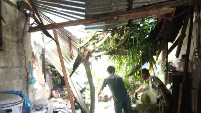 Pohon Tumbang Timpa Rumah Warga di Lubuk Begalung Padang, BPBD:Rusak Ruang Tamu dan Dapur