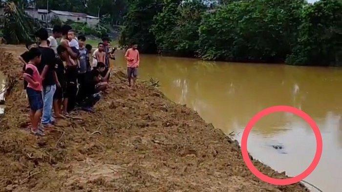 Buaya Muncul di Dharmasraya Jelang Buka Puasa, Warga Ramai-ramai Menonton dari Pinggir Sungai
