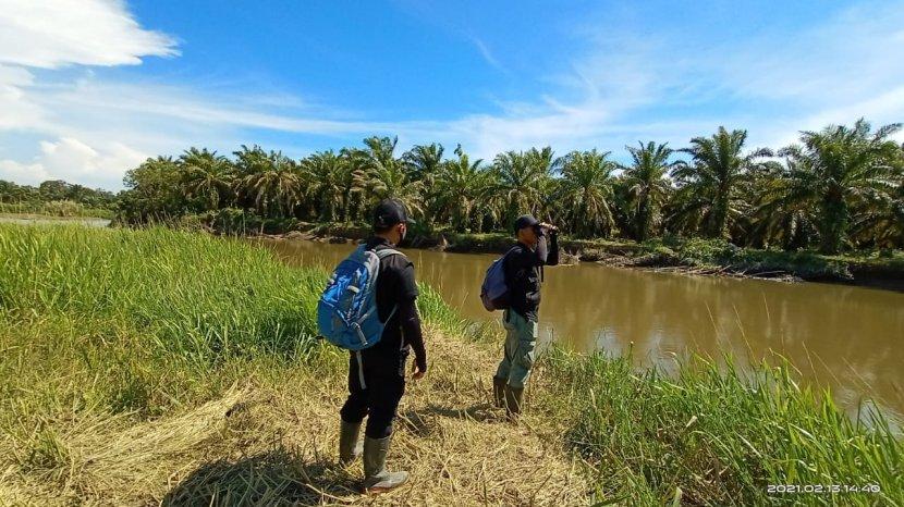 Buaya Mendadak Muncul Di Kawasan Wisata Pantai Torpedo Kabupaten Agam Ade Putra Hanya Melintas Tribun Padang