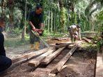 chainsaw-musna28.jpg