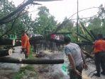 dua-pohon-tranbesi-tumbang-akibat-angin-kencang.jpg