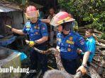 evakuasi-ular-jenis-piton-yang-bersembunyi-di-bawah-tumpukan-kayu-di.jpg