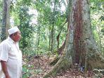 hutan-adat-di-koto-besar-dharmasraya.jpg