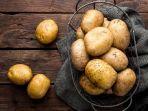 ilustasi-kentang.jpg
