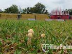 jamur-tampak-tumbuh-di-lapangan-gor-h-agus-salim-padang-senin-3092019.jpg