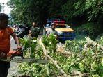 pembersihan-pohon-tumbang-oleh-tim-trc-bpbd-kota-padang-di-bukit-lampu.jpg
