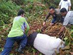 petugas-bksda-dan-masyarakat-saat-membantu-adanya-satwa-jenis-tapir-terjerat-di-perkebunan-warga.jpg
