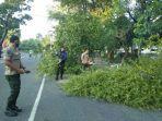 petugas-bpbd-membersihkan-pohon-yang-tumbang.jpg