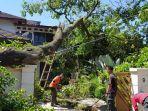 pohon-tumbang-akibat-angin-kencang-menimpa-rumah-warga-di-padang.jpg