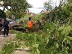 pohon-tumbang-di-parkiran-gor-h-agus-salim-padang-minggu-1212020.jpg