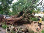 pohon-tumbang-hambat-akses-jalan-gereja-padang.jpg