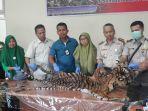 selembar-kulit-harimau-sumatera-ditemukan-dalam-sebuah-paket.jpg
