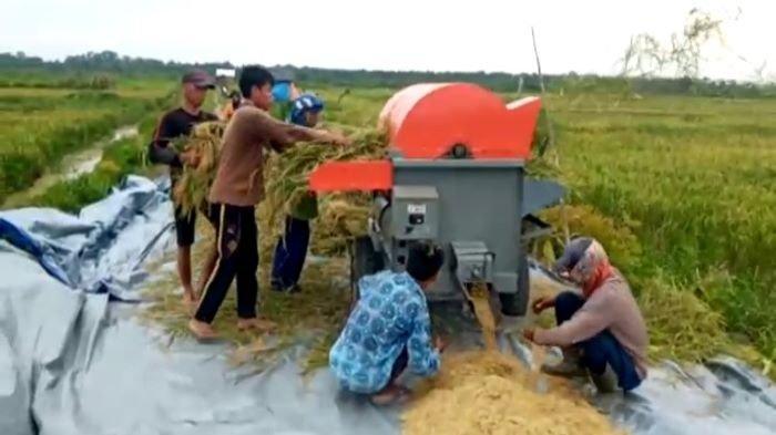 Sembilan Kabupaten di Sumsel Prioritas Program Food Estate, Ditargetkan Bisa Produksi 8 Ton Beras