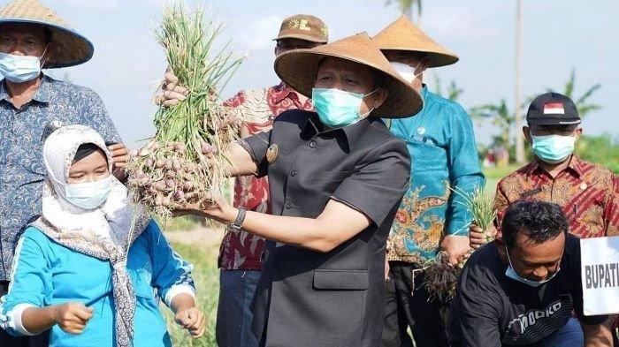 Petani Belitang OKU Timur Uji Coba Tanam Bawang Merah, Hasil Panen 8 - 10 Ton per Hektar