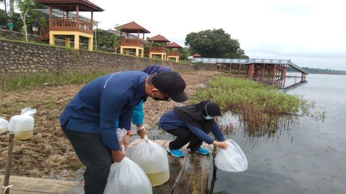 Dinas Perikanan Muba Sebar 140 RibuBenih Ikan, Jaga Ekosistem DanauUlak Lia Sekayu