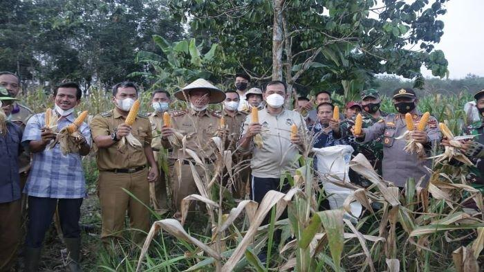 PLH Bupati OKU Kunjungi Petani Tinjau Pengolahan Pengeringan Jagung