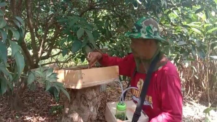 Budidaya Lebah Kelolot Cukup Menjanjikan, Sulardi: Madunya Meningkatkan Imun dan Vitalitas