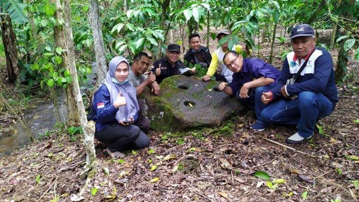 Lumpang Batu Tersembunyi di Kebun Kopi Desa Bandar Aji, Benda Purbakala Berumur Ribuan Tahun