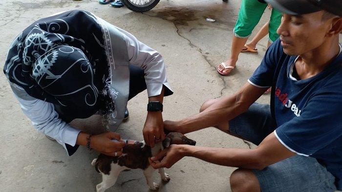 3 Dokter Hewan di Muba Melayani Vaksinasi Rabies Gratis untuk Hewan Peliharaan, Berikut Jadwalnya