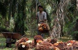 Sumardjono: Ekspor Sawit Meningkat,  Sinyal Positif Perekonomian Sumsel
