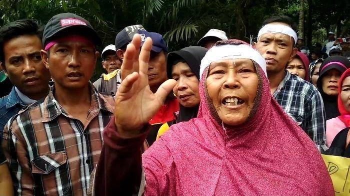 Bekerja di PT Lonsum Sejak Tahun 1994 Terakhir Jadi Mandor, Nurhani Di-PHK Tanpa Imbalan Jasa