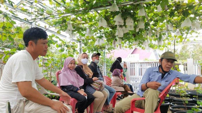 Tips Menanam Pohon Anggur dari Maman Wahari, Warga Desa Persiapan Jerambah Besi, Talang Ubi,  PALI