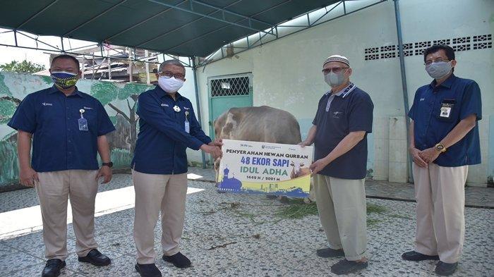 Daftar Masjid Penerima Sapi dari PT Pusri Palembang di Idul Adha 2021, Total ada 39 Ekor - bantuan-sapi-dari-pt-pusri.jpg