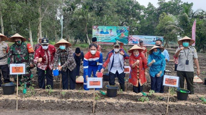 Bupati Banyuasin:  Launching Tanam Sayur Momen Baik Peningkatan Ekonomi Mandiri Di Masa Pandemi