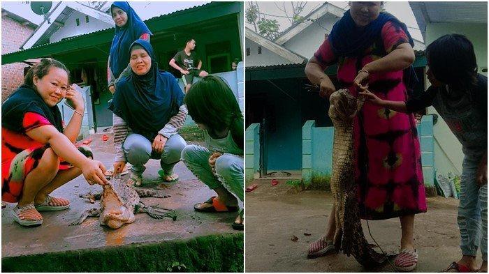 Sering Makan Ternak Warga di Lubuklinggau, Buaya Sepanjang 2 Meter Ditembak Mati: Jadi Tontonan
