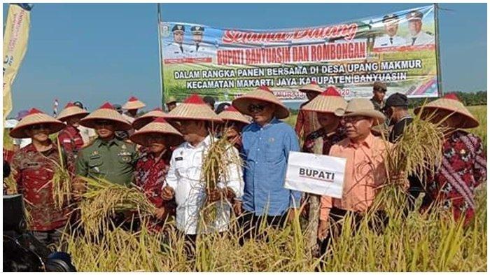 Petani Banyuasin Panen Raya di Tengah Wabah Pandemi Covid-19