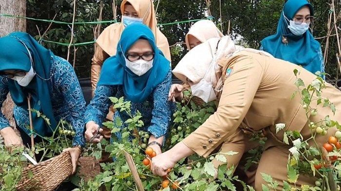 'Jangan Sampai Orang Desa Beli Sayur ke Kota', Bupati Musi Rawas Ajak Warga Manfaatkan Pekarangan