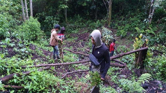 Ada Ladang Ganja di Pagaralam, Empat Kabupaten Ini Juga Incaran Dit Res Narkoba Polda Sumsel