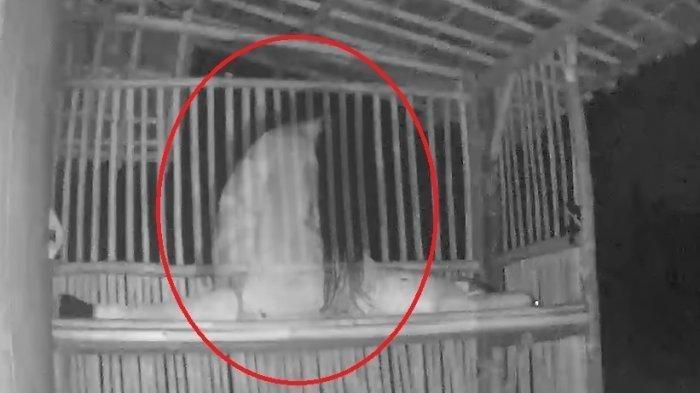 VIRal Video, Tidur di Gubuk Angker, Pria Ini Dirudapaksa Kuntilanak:'Terasa Berat dan Basah'