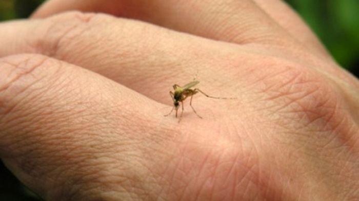 Ketimbang Orang Lain, Inilah 7 Alasan Kenapa Seseorang Sering Digigit Nyamuk: Bau Tertentu