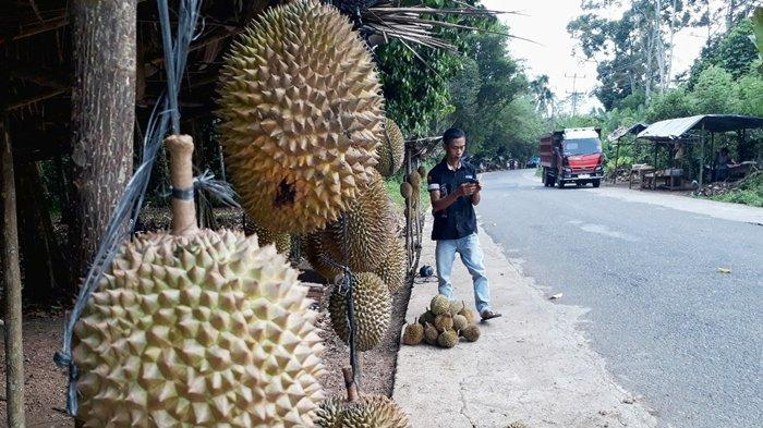 Durian OKU Selatan Mulai Dipanen, Jelang Nataru 2021 Harganya Masih Tinggi