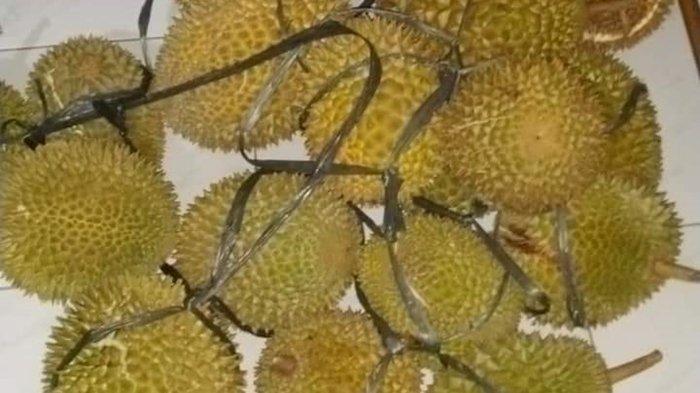 Ingin Makan Durian Sepuasnya? Yuk Datang ke Griya Agung Palembang, Hari Ini, Besok dan Lusa